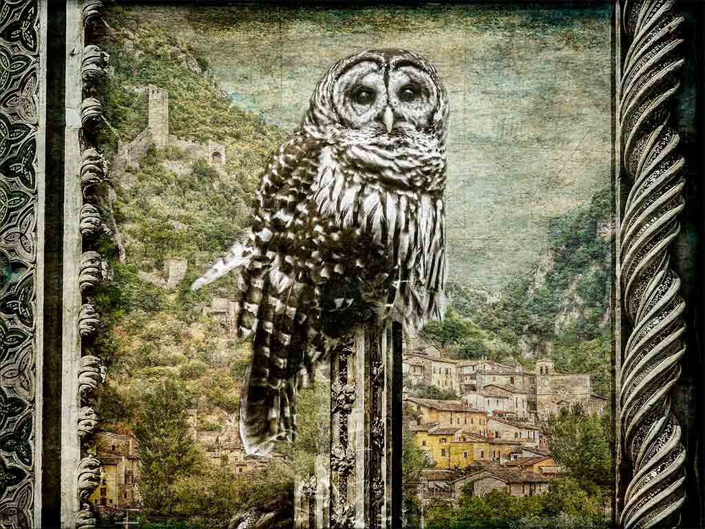 Owl-at-Ferentillo