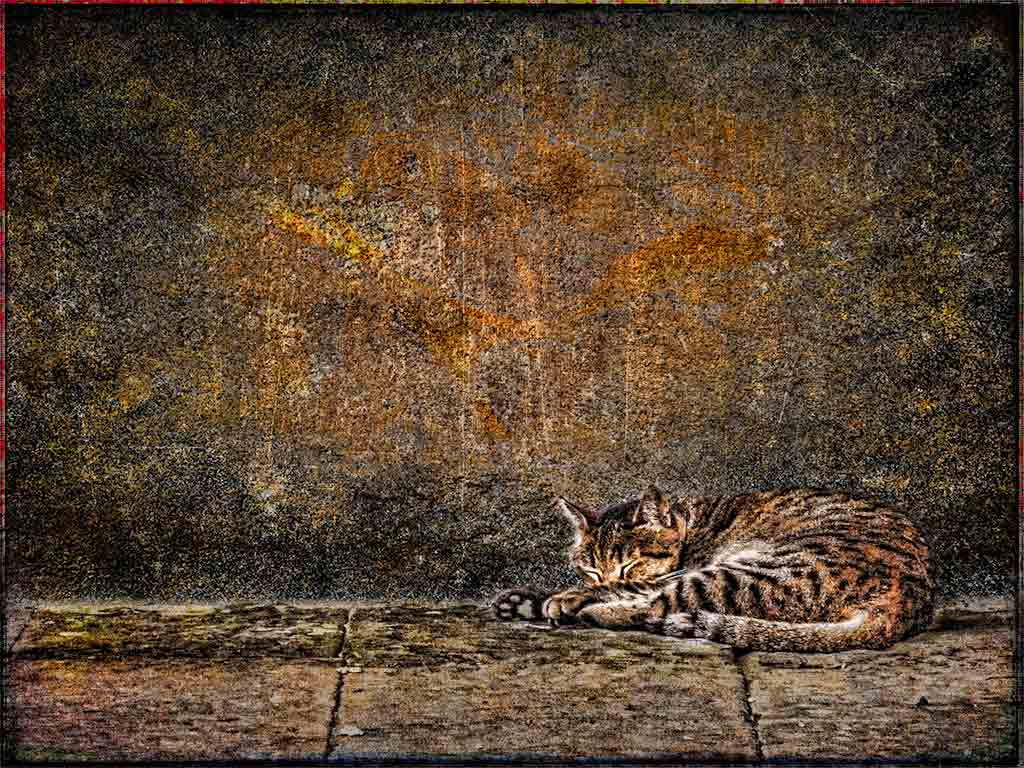 sleeping-cat